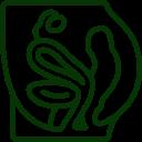 pelvic-area